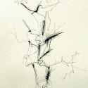 #1142 Pen & Ink